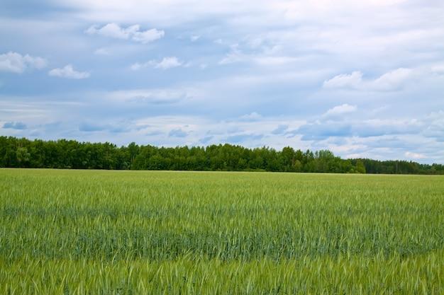 グリーンフィールドの夏の風景 無料写真