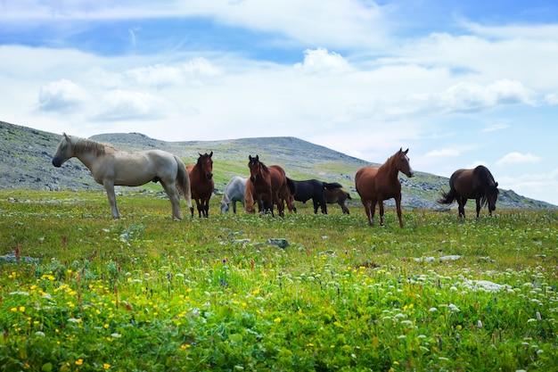 馬の群れ 無料写真