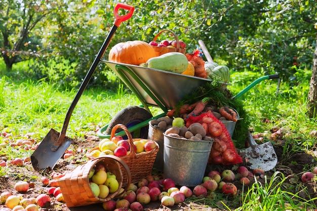 庭の野菜の作物 無料写真