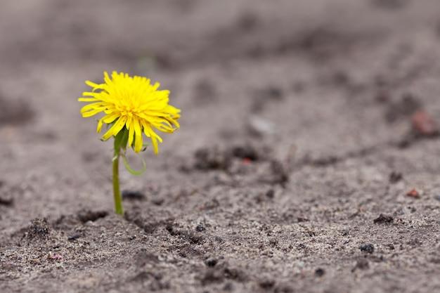 育っている黄色の花 無料写真
