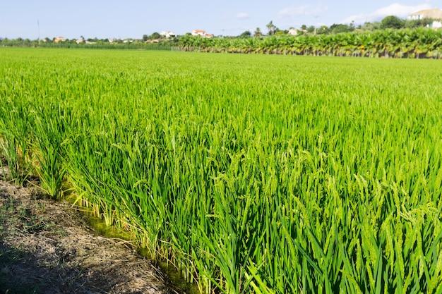 水田のある農村風景 無料写真
