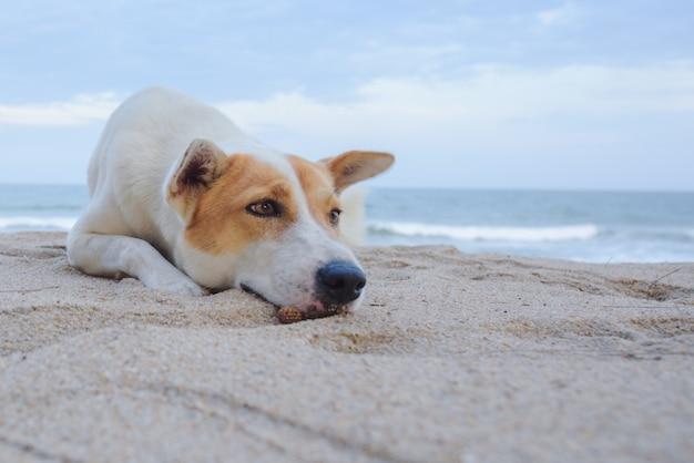 Собака лежит на песке на пляже, с грустными глазами и мокрым мехом Premium Фотографии