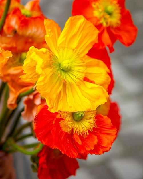 黄色のアネモネの花の花束のクローズアップ表示 無料写真