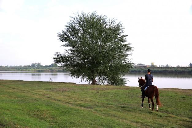 Спина человека ведет лошадь к дереву возле озера Бесплатные Фотографии