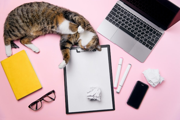 女性のオフィスデスクの背景の上に横たわる面白い遊び心のある猫 Premium写真
