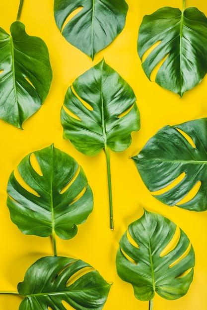 Узор из тропических листьев монстера на желтом фоне Premium Фотографии