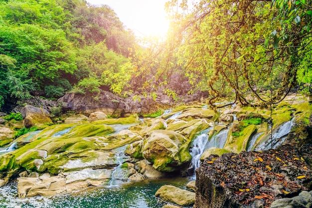 苔の谷の噴水森林は地質学を去る 無料写真