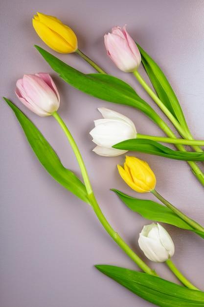 薄紫色の背景に分離された白黄色とピンク色のチューリップの花の上から見る 無料写真