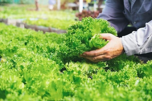 庭師は家庭菜園から野菜を収穫します。 Premium写真