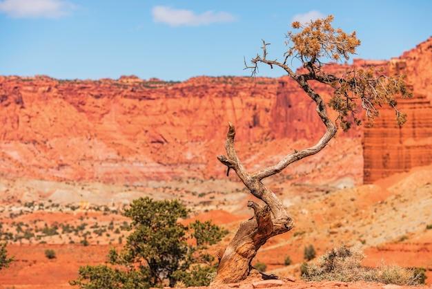 ユタ州の孤独な木 無料写真