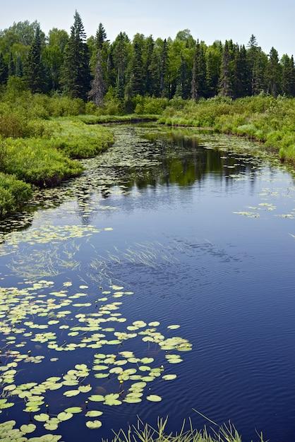 ミネソタの森と川 無料写真