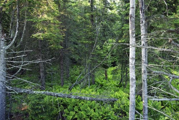 ミネソタの森 無料写真