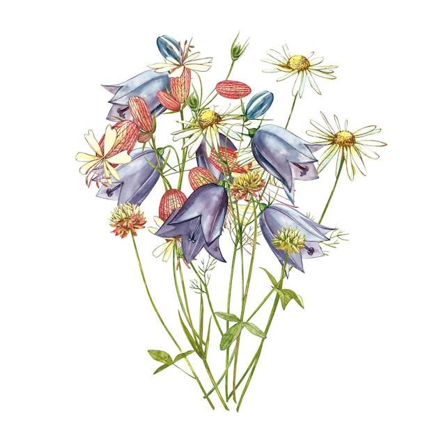 膀胱カンピオンとベルの花。ヤグルマギク、花の要素、手描きの植物図を描く水彩セット。 Premium写真