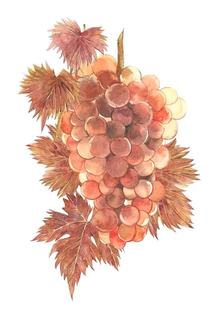 ブドウの房の水彩イラスト。 Premium写真