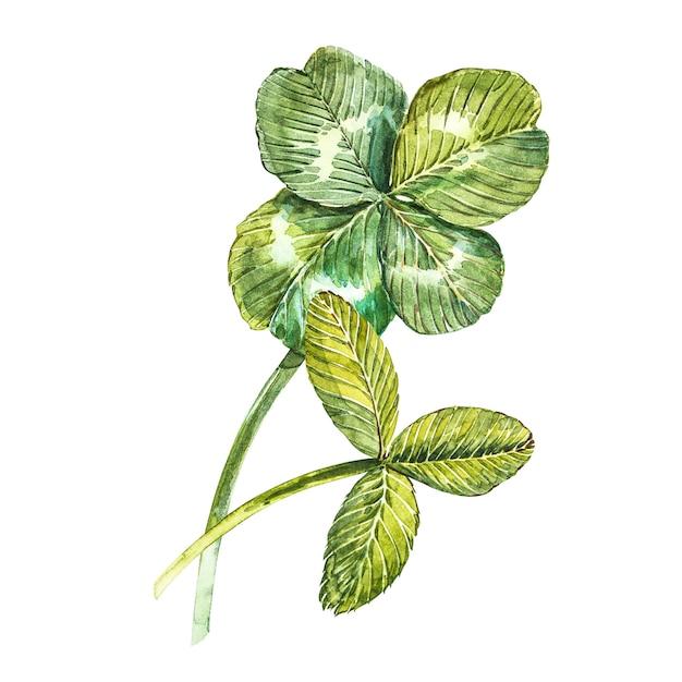 クローバーの葉のセット-四つ葉と三葉。水彩イラスト。デザイン要素ハッピー聖パトリックの日 Premium写真