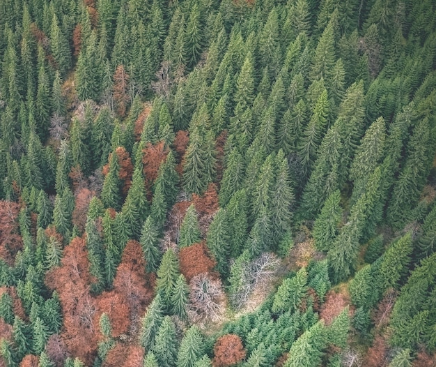 Стильный осенний лес Premium Фотографии