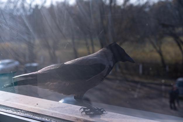窓の外のカラスは目をそらしている Premium写真