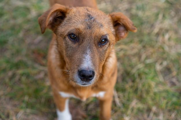 路上で座っているホームレスの犬。 Premium写真