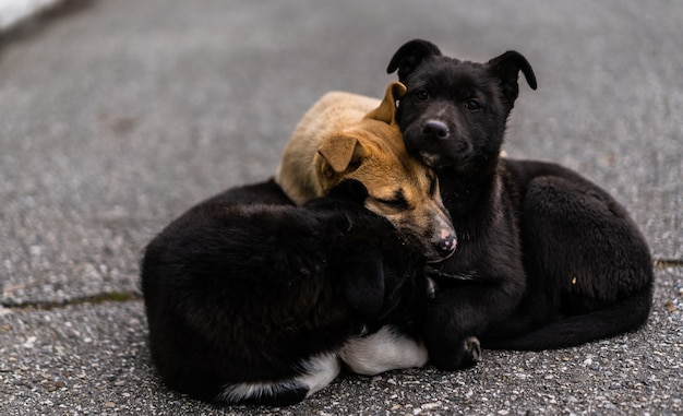 ホームレスの犬は寒さから通りでお互いに浴します Premium写真