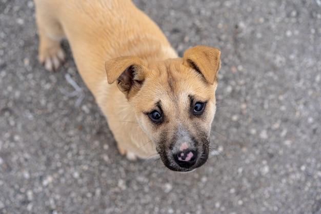 通りに住んでいる子犬 Premium写真