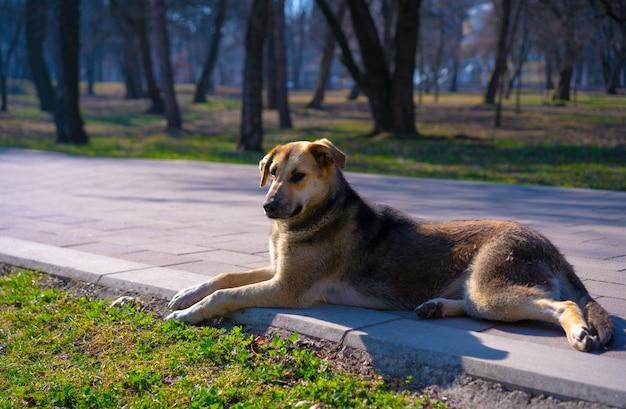 ホームレスの犬は太陽の下で日光浴します Premium写真