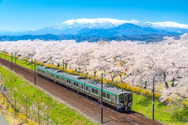 さくらと桜の満開の東北電車の日本風景風光明媚な景色。 Premium写真