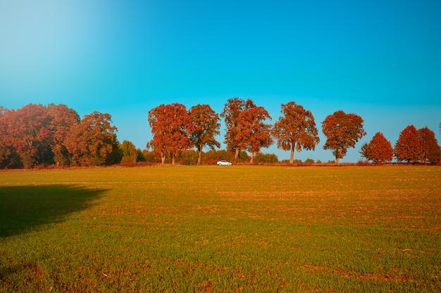 秋の風景。サンゴの木、秋の森の道の車。 Premium写真