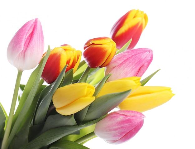 チューリップ、色とりどりのチューリップ、自然の背景の美しい花束 無料写真