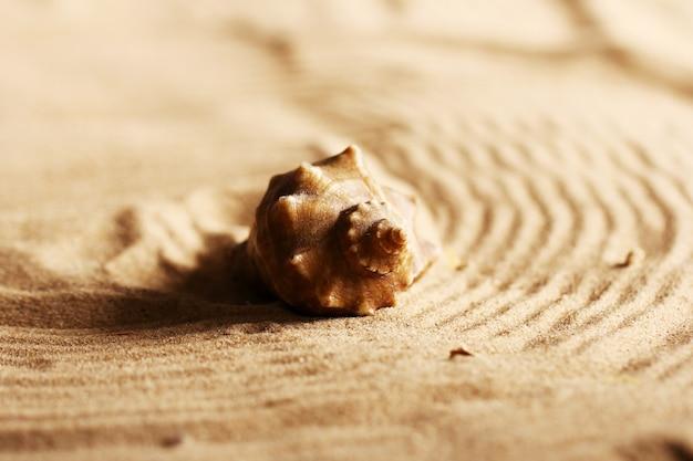 砂の上の貝殻 無料写真