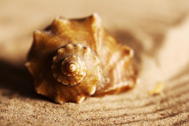 Ракушки на песке Бесплатные Фотографии