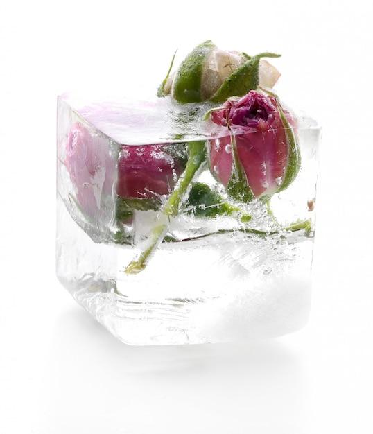 Замороженная роза Бесплатные Фотографии