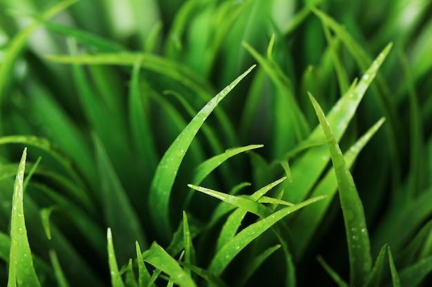 緑の草のクローズアップ 無料写真
