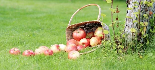草の上のリンゴ 無料写真
