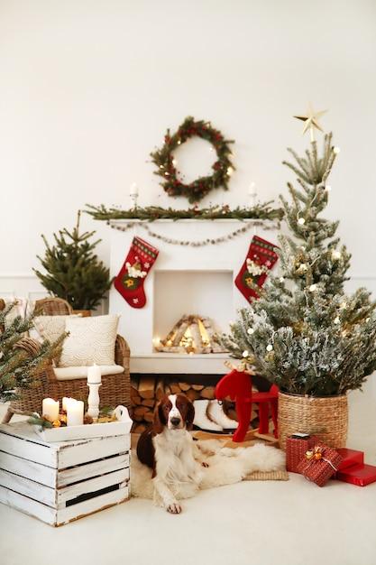 クリスマス装飾されたリビングルームでかわいい犬 無料写真