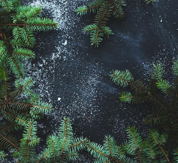 黒の背景にオークの木の枝 無料写真