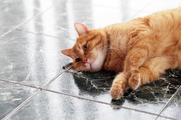 床にかわいい猫 無料写真