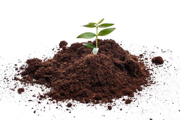 土壌中の小さな緑の芽 Premium写真