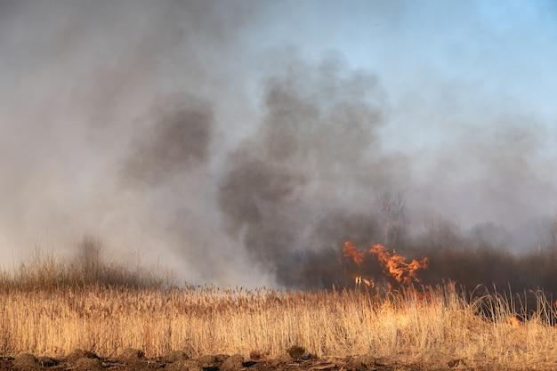 野火、スラウで燃えている杖。自然災害:火の炎に巻き込まれた湖の湿原。 Premium写真