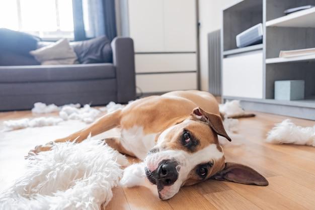 犬は、リビングルームで枕の破れた部分にあります。 Premium写真