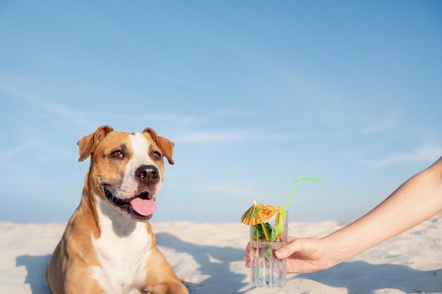 Лечить за бокалом холодного коктейля на пляже. Premium Фотографии