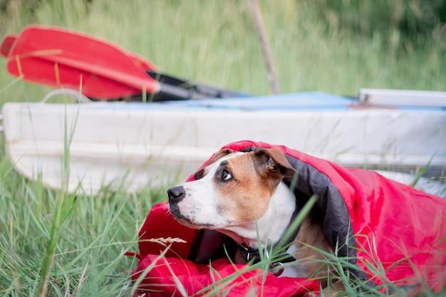 キャンプ場でカヌーボートの前の寝袋に犬が横たわっています。 Premium写真