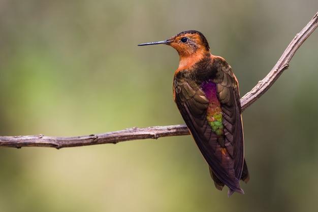 Красочный колибри на ветке Premium Фотографии