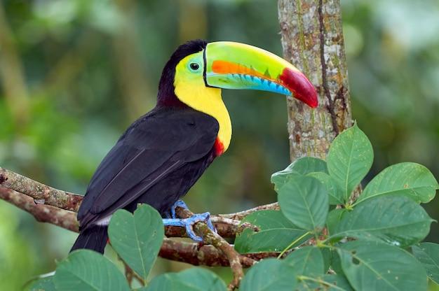 Красивая и красочная птица сидела на дереве Premium Фотографии