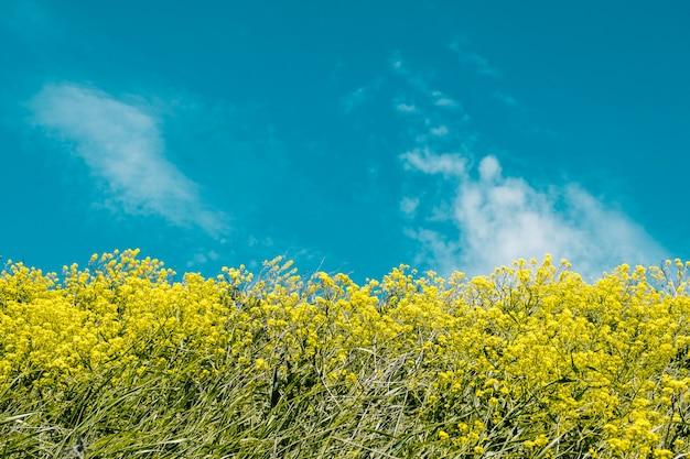 青い空を背景に黄色の花 Premium写真