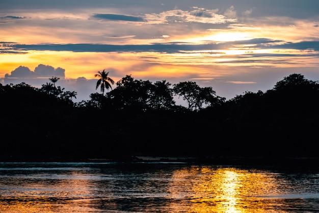 Силуэт леса с пальмами Premium Фотографии