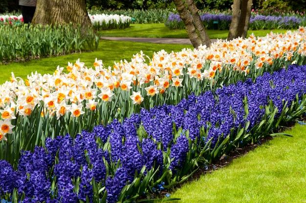 オランダ(オランダ)のキューケンホフ公園の美しい春の花 Premium写真