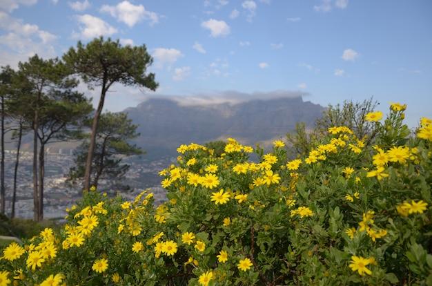 テーブルマウンテンと自然、ケープタウン、南アフリカ共和国の美しい景色 Premium写真