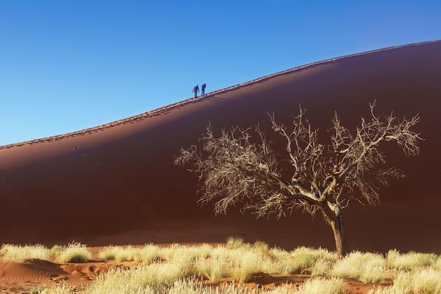 Люди, идущие на красивых восходящих дюн пустыни намиб, соссусвлей, намибия, южная африка Premium Фотографии
