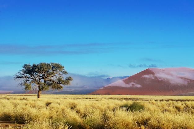 Африканский пейзаж, красивые закатные дюны и природа пустыни намиб, соссусвлей, намибия, южная африка Premium Фотографии
