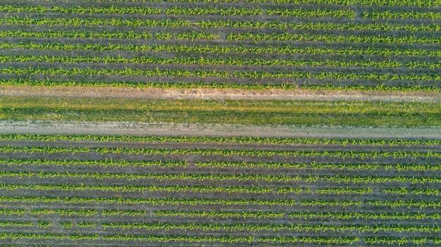 Воздушная вид сверху виноградников пейзаж сверху фон, южная франция Premium Фотографии
